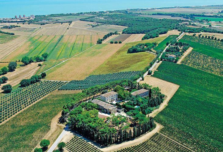 Fattoria Le Terrazze - produzione e vendita vino - Numana - Riviera ...