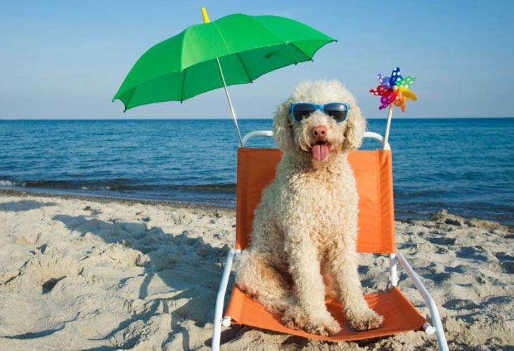 I cani possono fare il bagno in mare free i cani possono for Cani che non vogliono fare il bagno